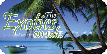 Cruise Planners Specials